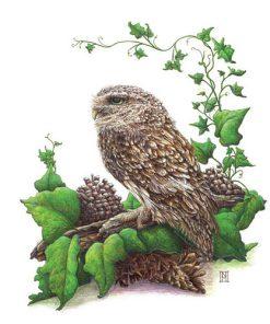 Oscar Owl Card